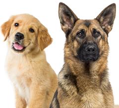 Positive Tails Dog Training