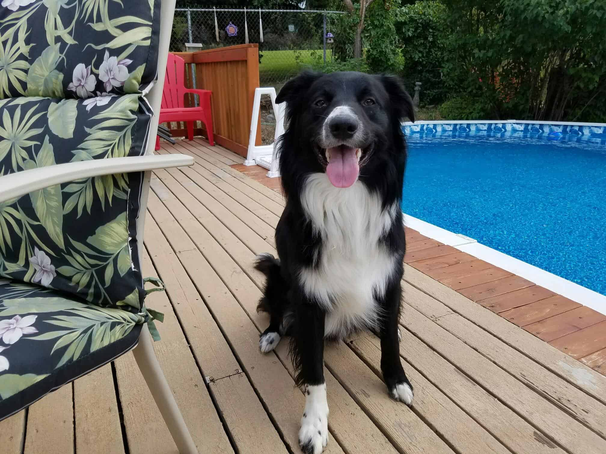 Fred the Border Collie